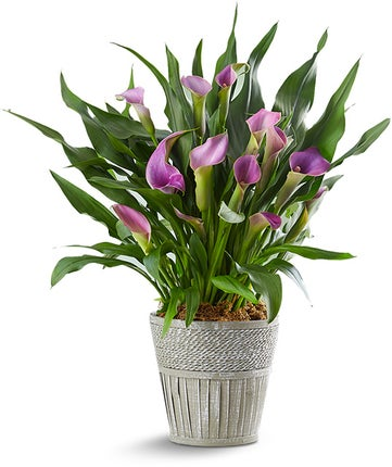 Plant Gift Guide Send Plant Gifts For Delivery 1800flowers