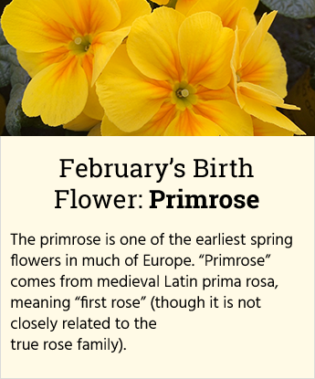 February Birth Flower