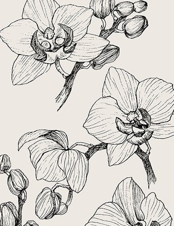 <p>Orchid Hunting In<br> Victorian Times<br> Was No Joke</p>