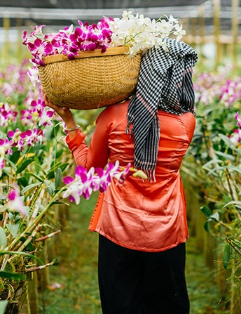 <p>Orchids Are Exotic</p>