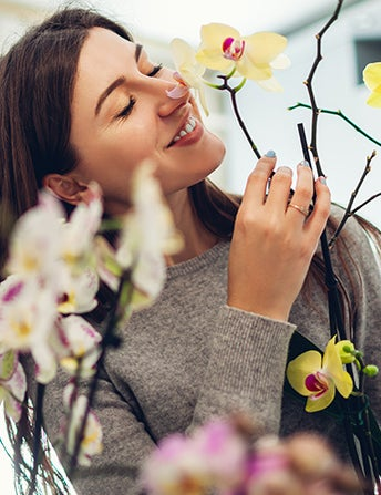<p>Orchids Are One Of<br> The Most Popular<br> Houseplants</p>