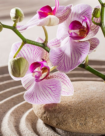 Orchids are used in feng shui decor