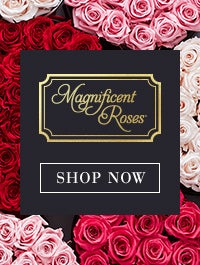 Magnificent Roses