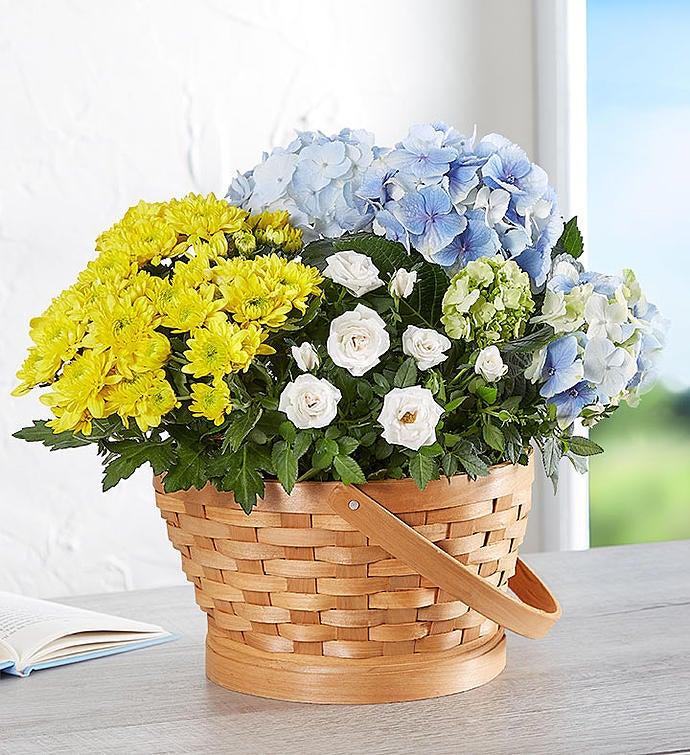 Joyful Blooms Dish Garden