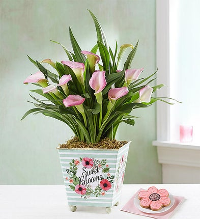 Pink Calla Lily with Cookie