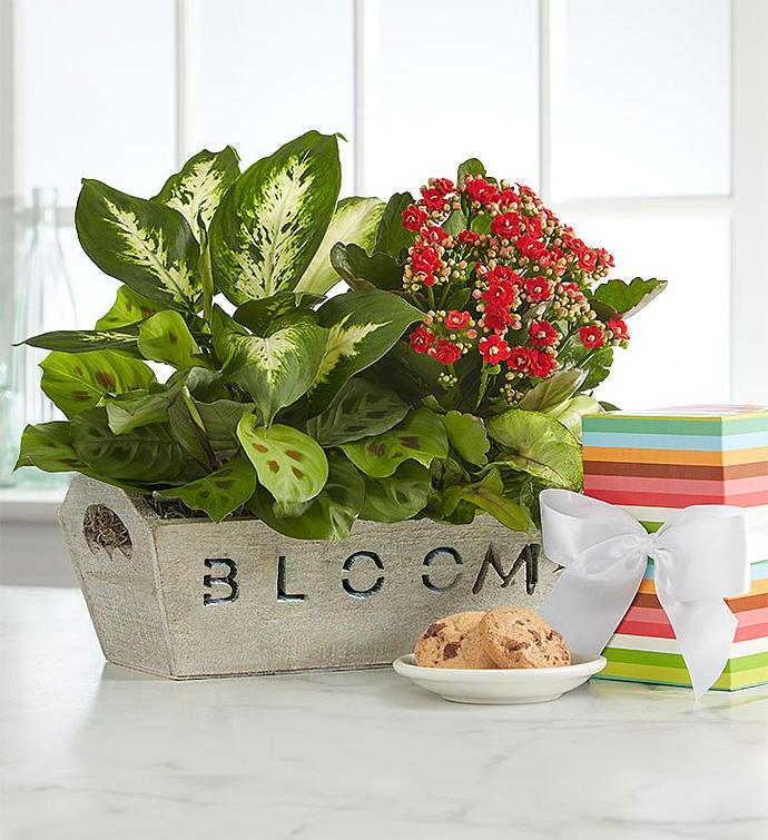 Bloom Dish Garden