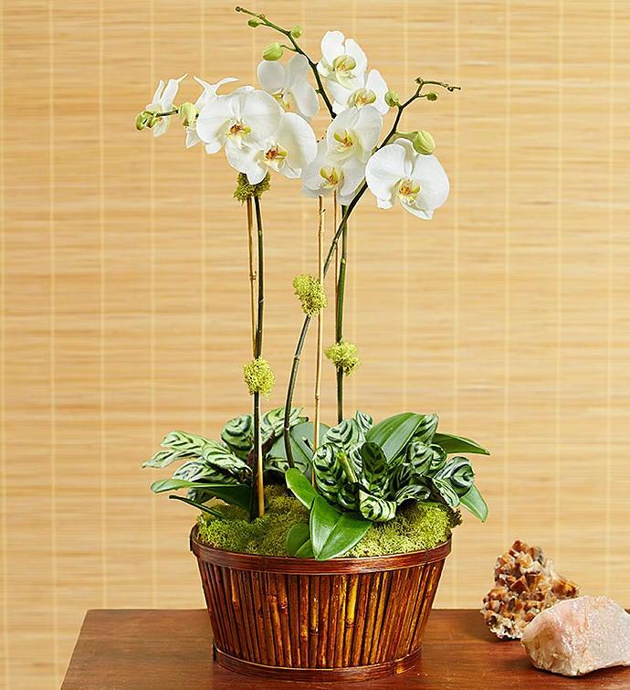White Orchid Bamboo Garden