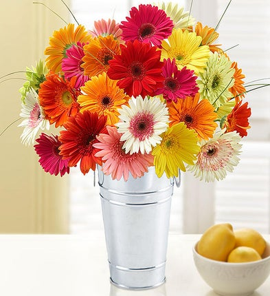 Mother's Day Happy Gerbera Daisies, 12-24 Stems